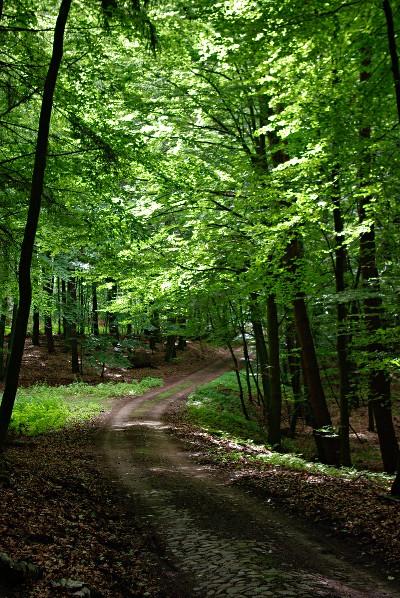 Zu Erholungszwecken unnötig? Alter Pflasterweg in der Himmelpforter Heide.